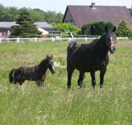 Ecole supérieure d'équitation Cheval Roy - Ecole d'équitation